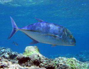 Fischölkapseln Wirkung - Besonders Kaltwasserfische sind gute Quellen